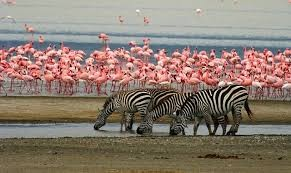 Tanzania Northern Circuit: Tarangire, Lake manyara, Serengeti and Ngorngoro crat