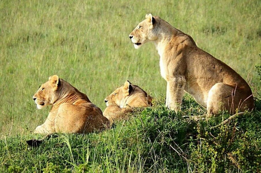 9 Days Kenya Wildlife Safari