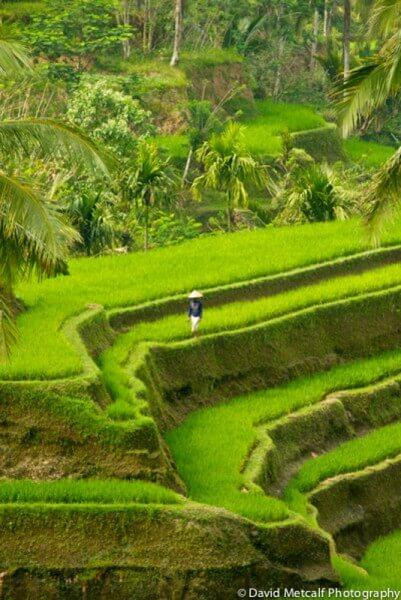 SIDEMEN (East Bali)