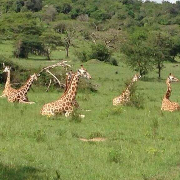Game drive and boat cruise