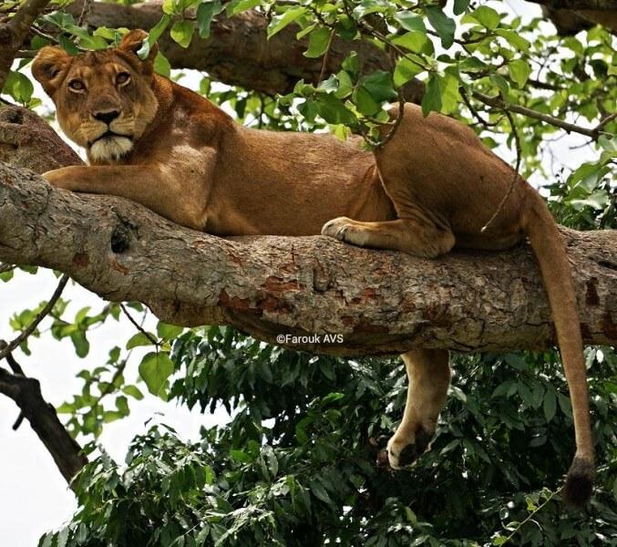 8 Days Big Five Safari