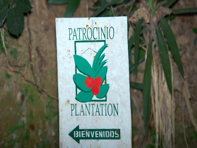 Birding at Coffee Plantations