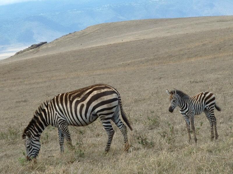 Tanzania Adventure Safari