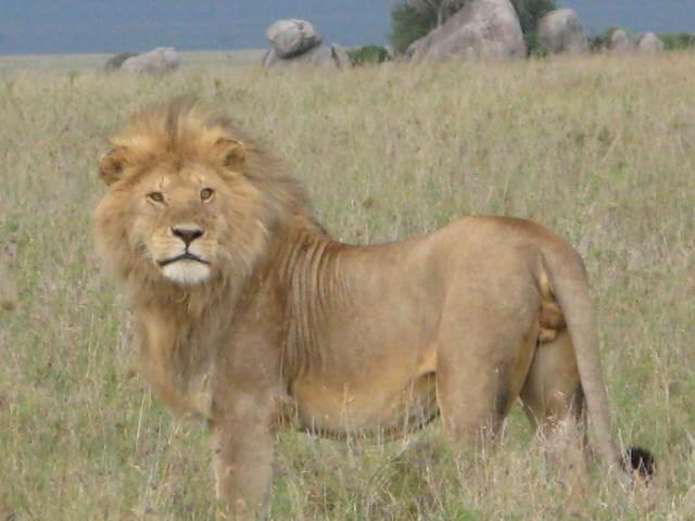 Tanzania Iconic Safari