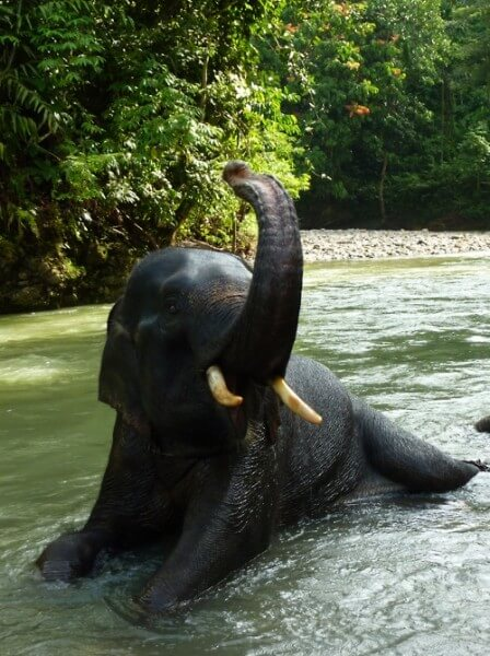 12 DAYS: FASCINATING SUMATRA