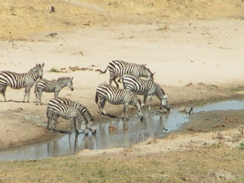 Tanzania Six Days Safari
