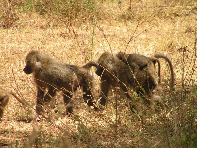 Tanzania Six Days Safari