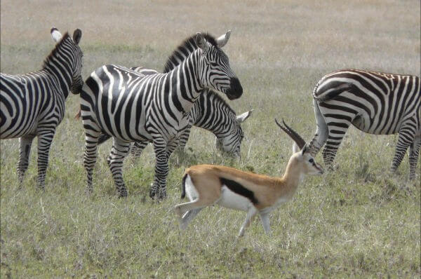 Tanzania Ten Days Culture & Wildlife Safari