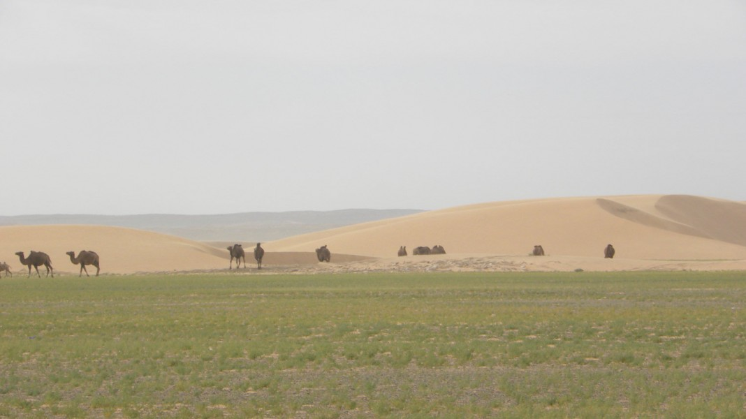 2018 Naadam Festival with Gobi desert Expedition (July 09-July 19)