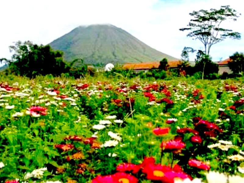 Explore Tangkoko and Minahasa then enjoy Gangga Island Resort