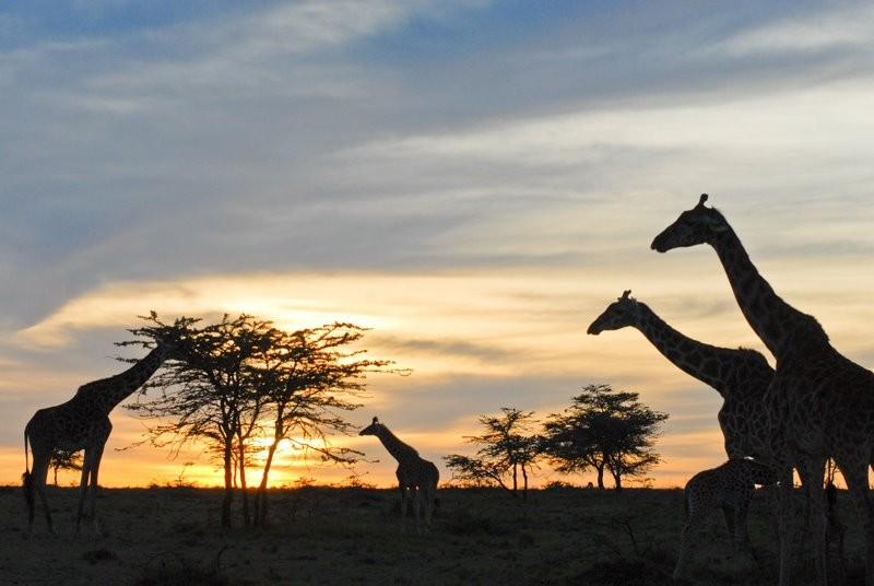 8 Days Exploration of Great Rift Valley Lakes & Maasai Mara Reserve