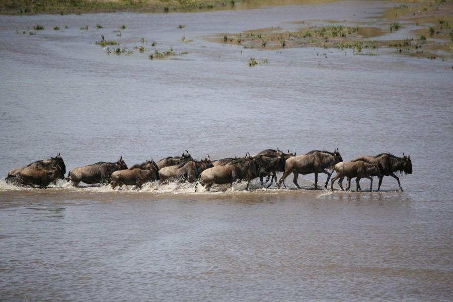 8 Days Honeymoon Adventure Safari