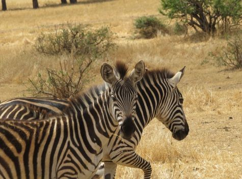 8 Days Honeymoon Adventure Safari