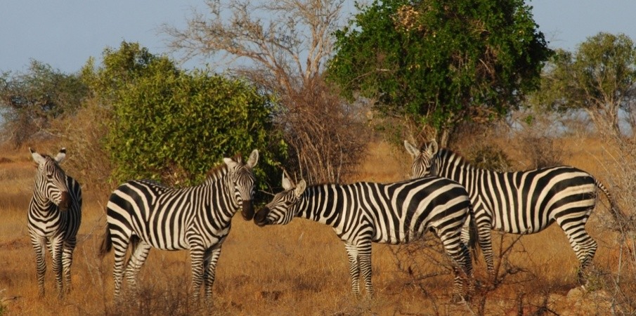 7 Days safari to Samburu, Lake Nakuru Lake Naivasha & Maasai Mara Game Reserve