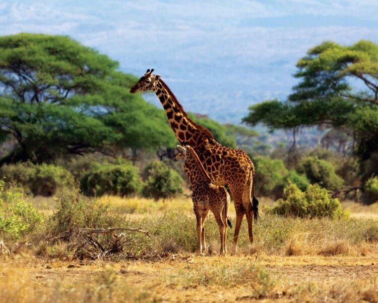 7 Days Aberdare,Lake Nakuru,Maasai Mara,Naivasha and Amboseli National park
