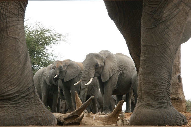 4 Day Madikwe Luxury Safari