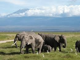 7 DAYS AMBOSELI,TSAVO WEST &EAST NATIONAL PARKS SAFARI