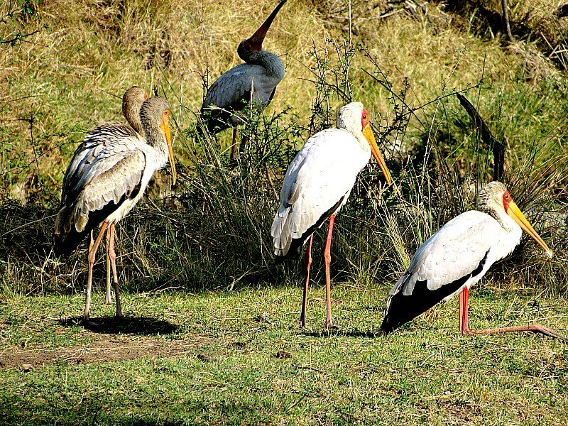 7 DAYS BIRD WATCHING TOUR