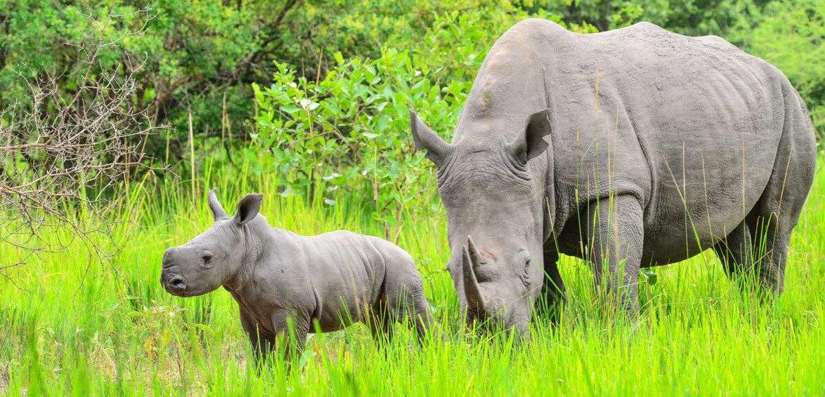 10 Days Luxury Gorilla and Wildlife Safari In Uganda