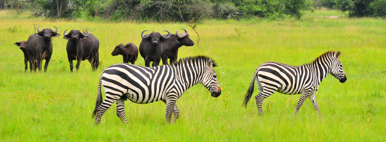 10 Days Luxury Gorilla and Wildlife Safari In Uganda