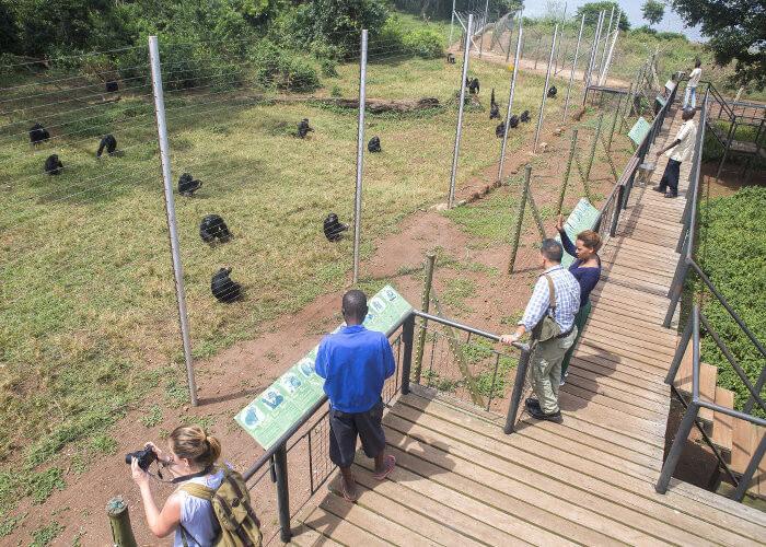 9 Days Midrange Uganda Primates - Lions & Much More Safari