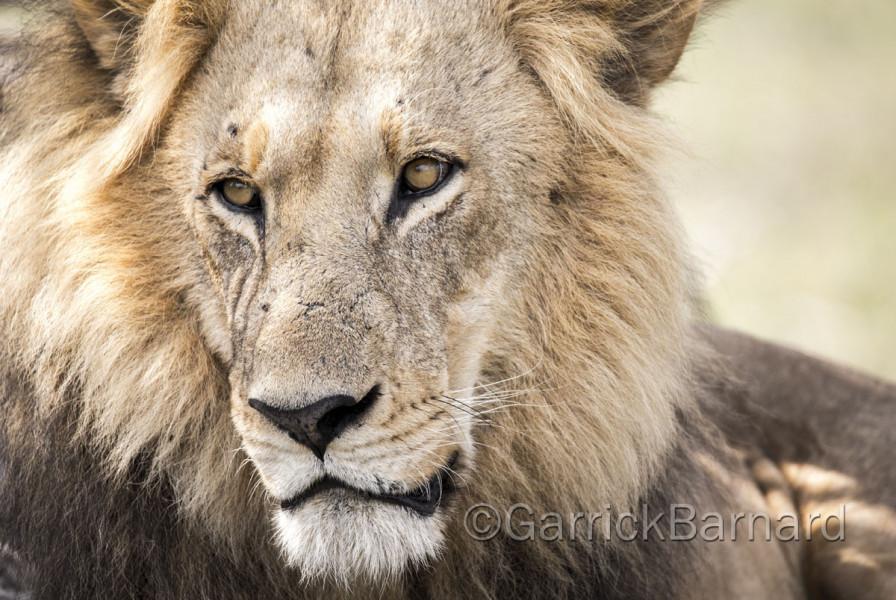 Safari - Kanana Private Reserve
