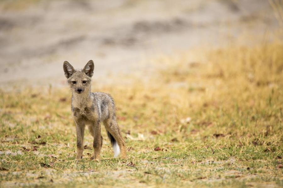 Safari - Shinde Private Reserve