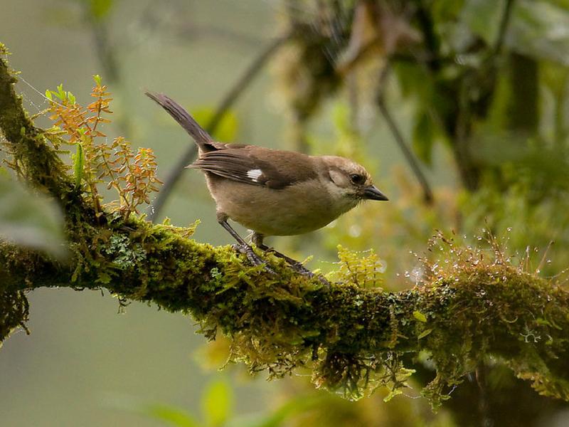 Birding Southern Ecuador, 15 days
