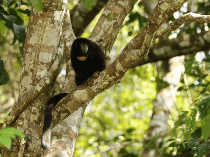 Ecuador between Andes and Jungle, 16 days