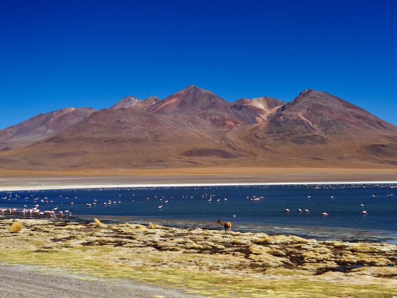 Gastronomic tour between Chile and Bolivia
