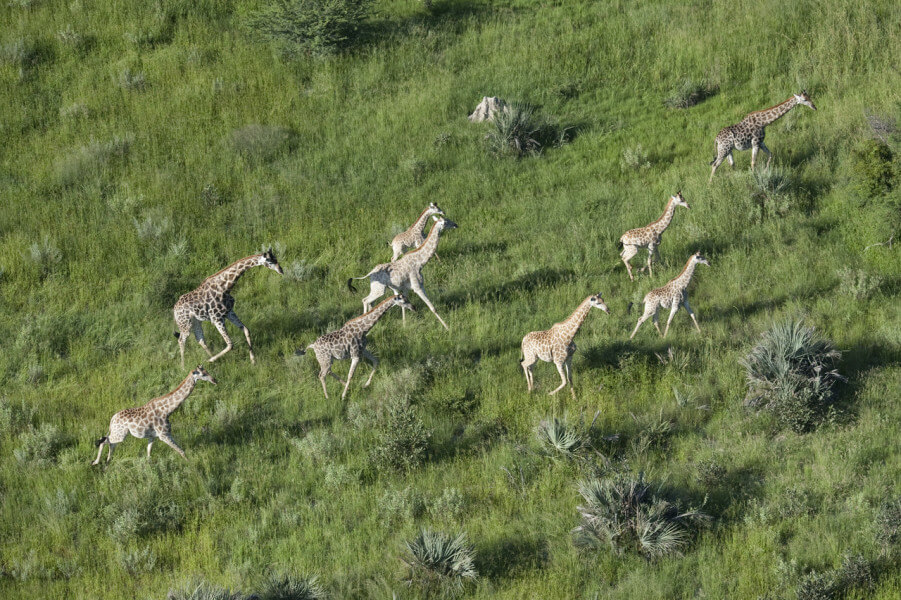 LECHWE SAFARI - 8 Nights