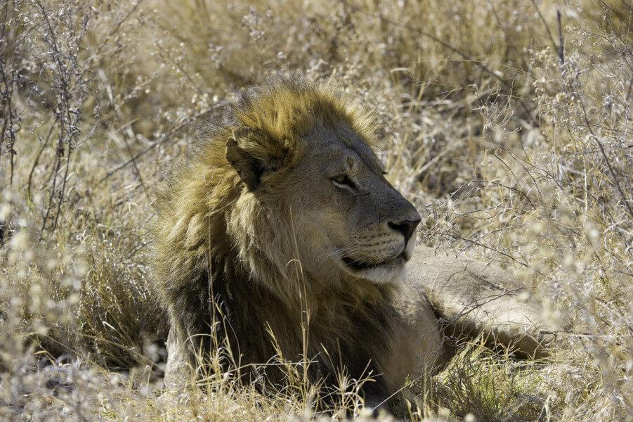 Safari - Vumbura