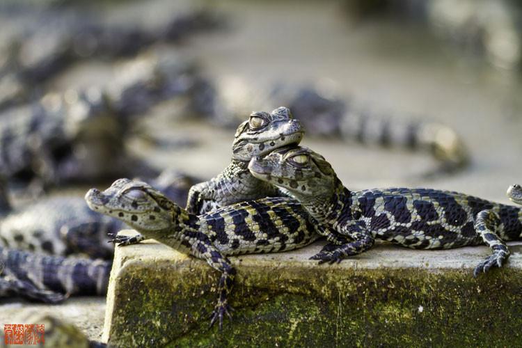 Esteros del Iberá - Fauna
