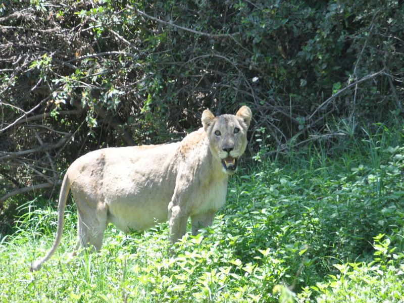 Kruger Park