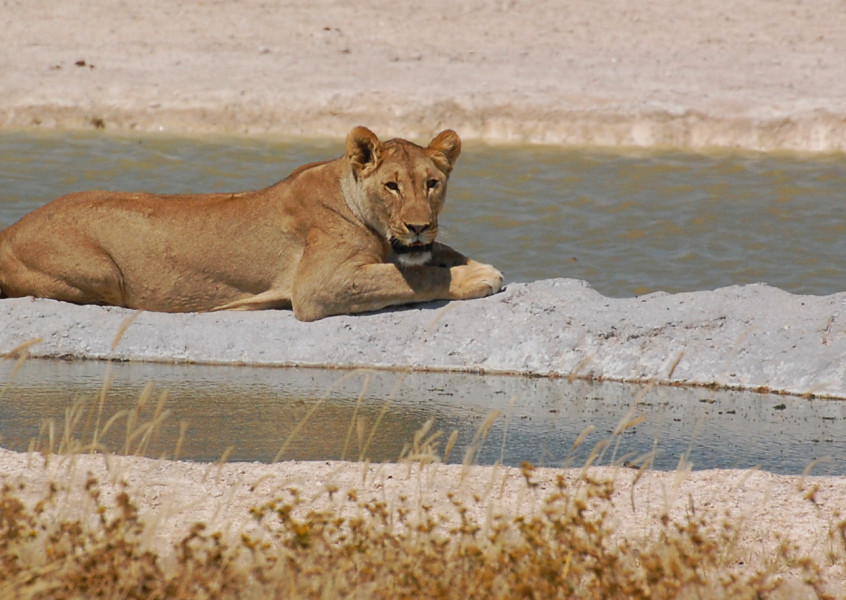 3 Day Etosha Scheduled Camping Tour