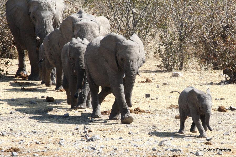 6 Days Taste of Namibia Camping Tour