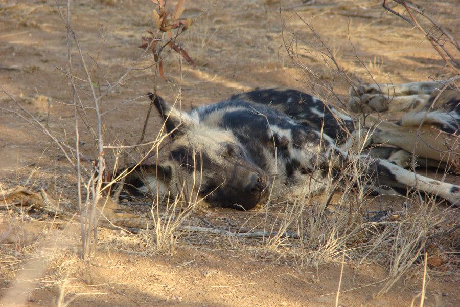 9 Day Okavango Delta & Vic Falls Camping Tour