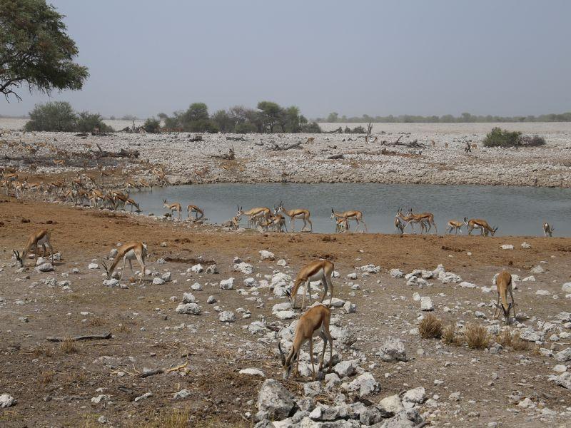 Petrified Forest - Twyfelfontein -Etosha