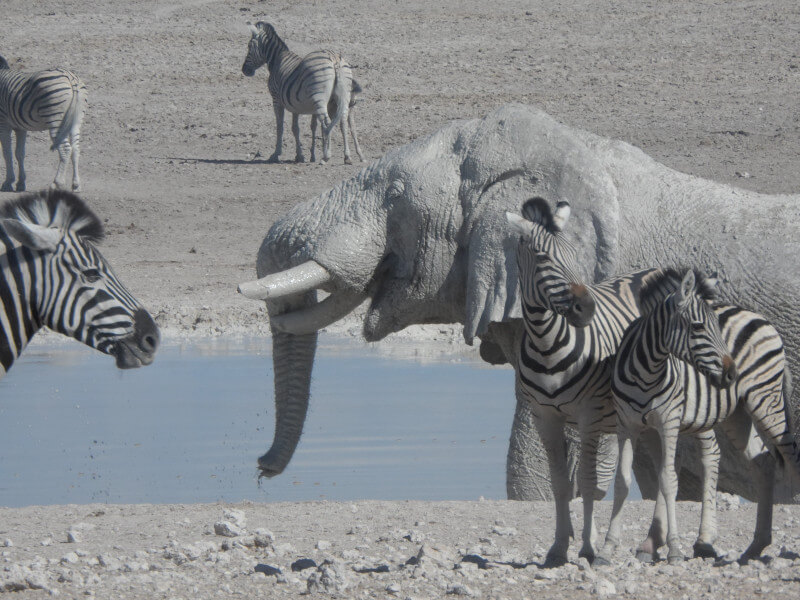 14 Day Namibia Experience Accommodated
