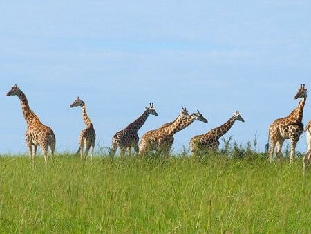 Do game drive in the morning, afternoon