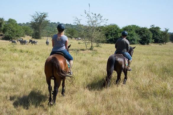 Morning game drive and Horseback riding