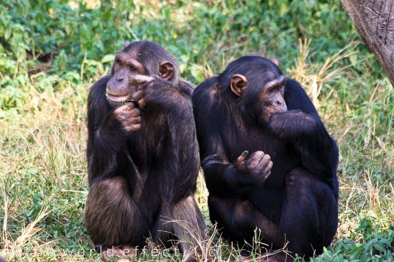 Chimpanzee tracking, Boat cruise and lat