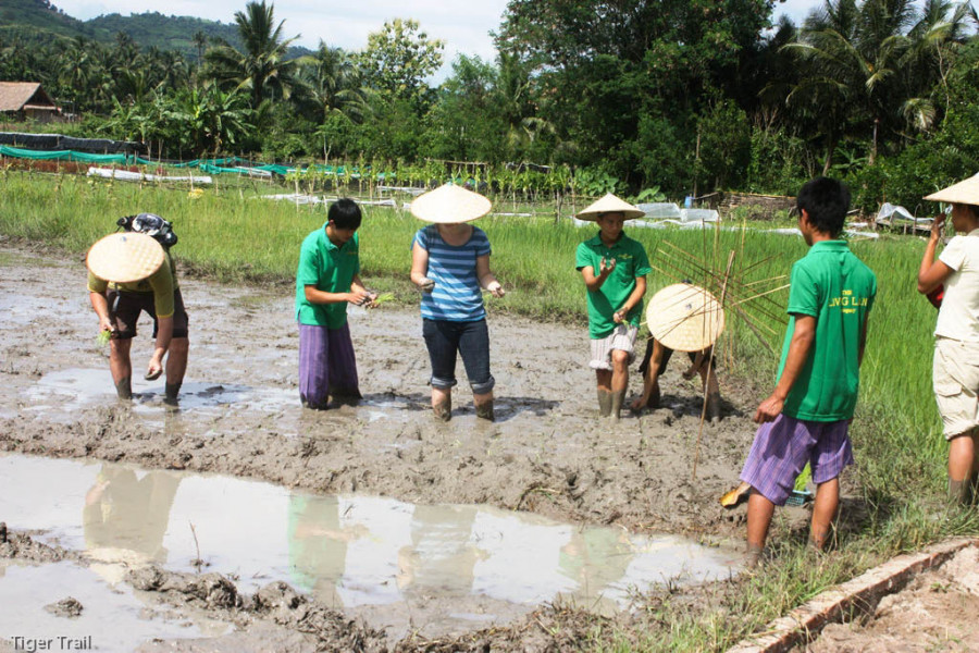 Rice is Life – Kuang Si Waterfalls