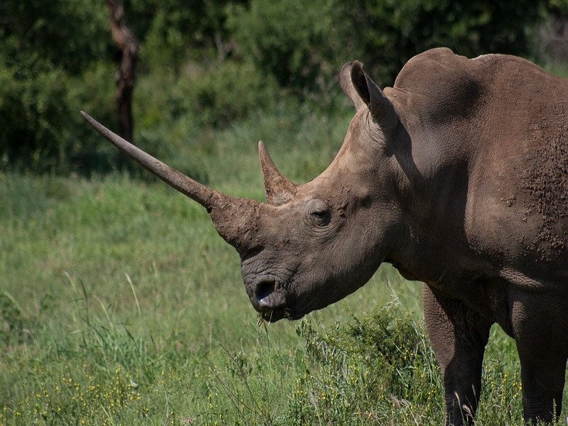 10 days Kruger Park and Zululand