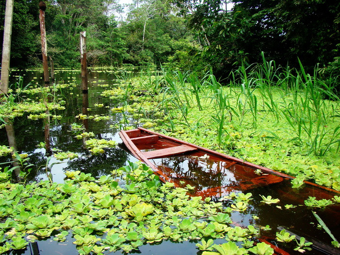 Colombia Megadiverse - Birdwatching experience