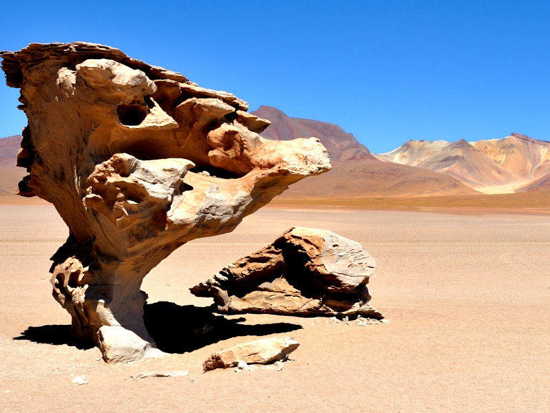 Fauna y Flora of Boliva