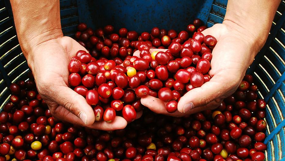 Armenia - Coffee premium experience