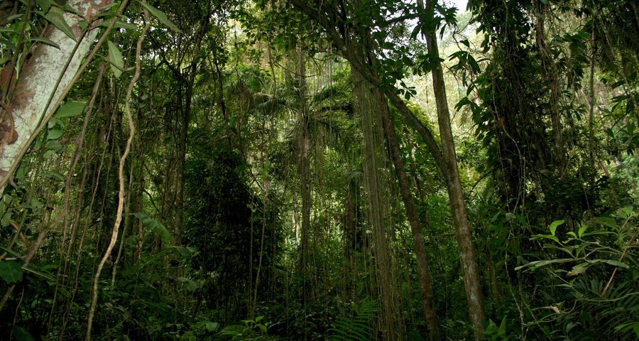 Full-day tour to Chicaque Natural Park