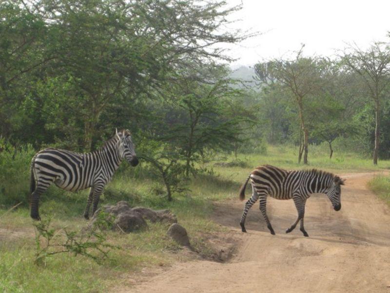 6 Days Gorillas & Wildlife Tour