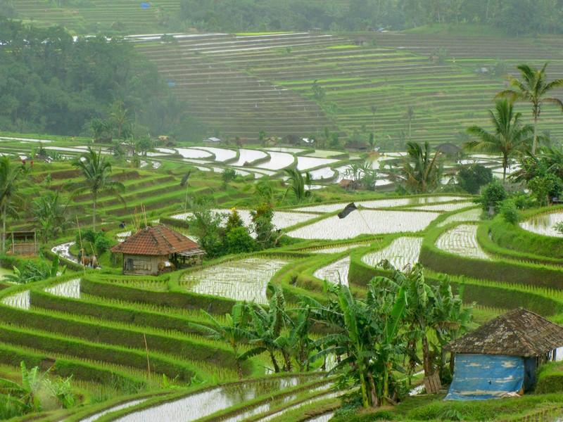 5 Days Taman Nusa Cultural Park + Uluwatu Temple & Water Sport
